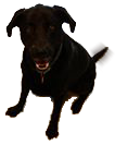 Murph Dog